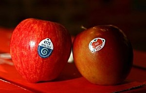 New Zealand Apples Available In Australia